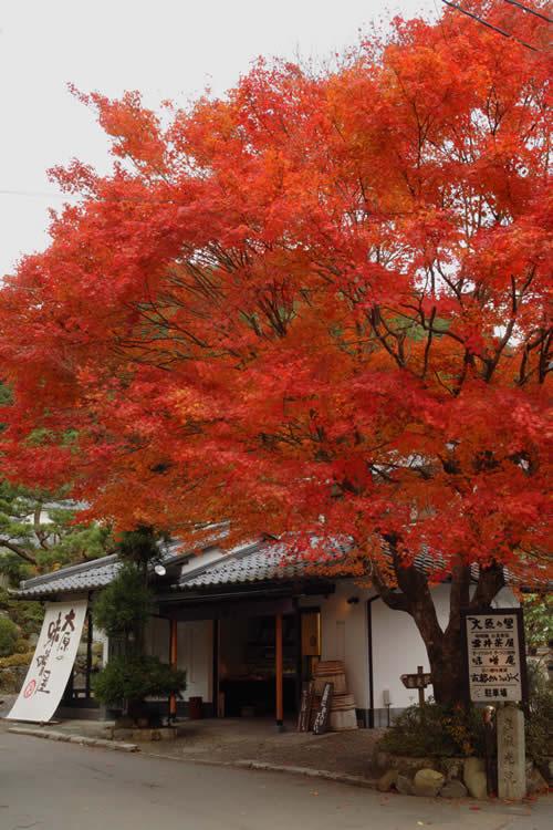 misoan_blog_2